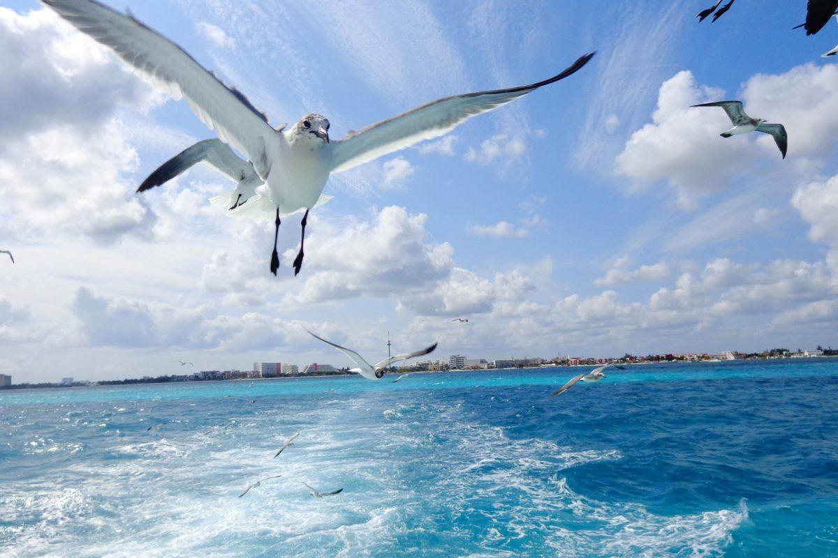 Sur de México y Cancun para este verano